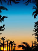 The silhouettes of palms on beautiful sunset background