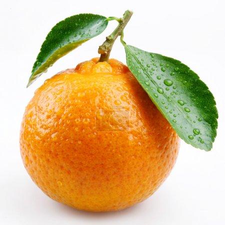 Photo pour Mandarine avec feuilles sur fond blanc - image libre de droit