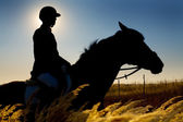 Jockey and horse silhouettes in the field in summertime