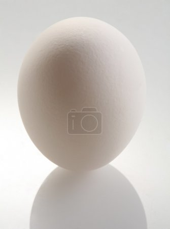 White egg on a white background.
