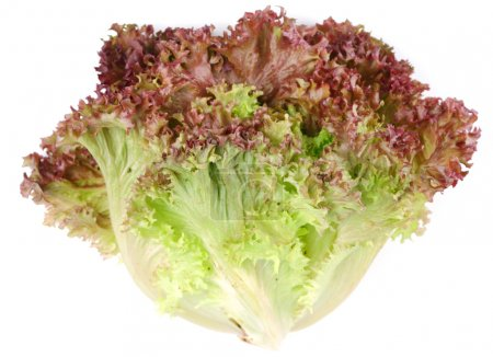 Photo for Bunch lettuce leaves on a white background. - Royalty Free Image
