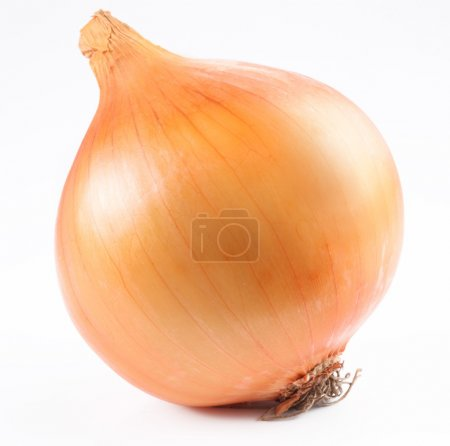 Ripe onion on a white background