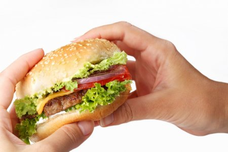 Hands hold a cheeseburger on a white background