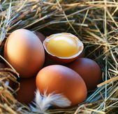 Chicken eggs in the straw with half a broken egg in the morning light.