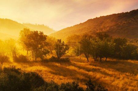 Dawn in Arcadia