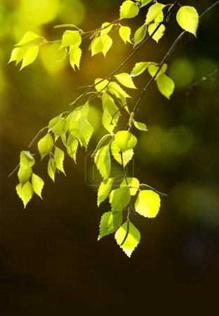 Background leaves green