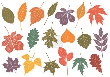 Vector illustration set of 19 autumn leaves.
