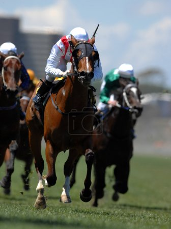 Photo for Track horse racing, galloping - Royalty Free Image