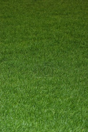 Photo for Green grass on field background - Royalty Free Image