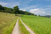 Letní krajina s road, trávy a stromů