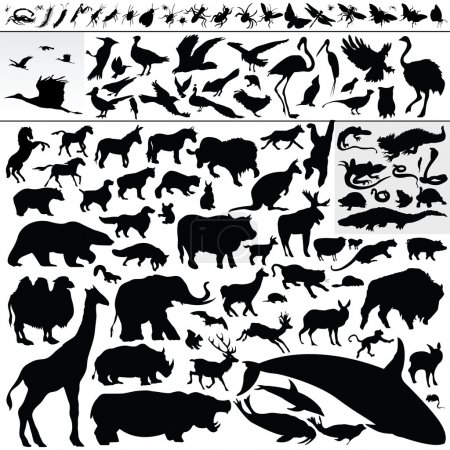 Illustration for Vector set of various animals - Royalty Free Image