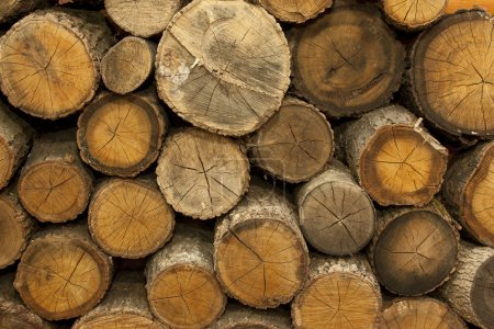 Piles of Wood Background