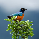 Bird on a branch.