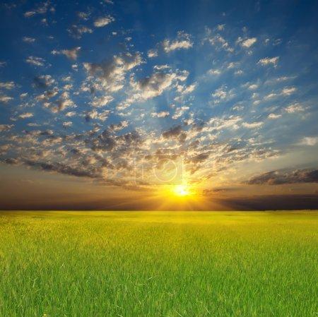 Foto de Paisaje del atardecer de verano: cielo nublado sobre campo verde - Imagen libre de derechos