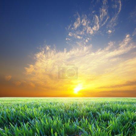 Beautiful sunset over green summer green grass meadow