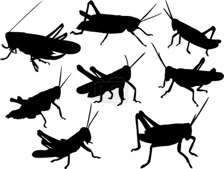 Grasshoppers silhouette collection - vector...