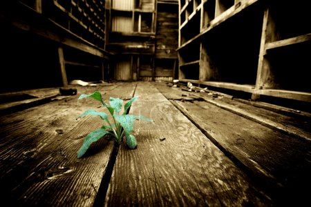 Photo for Hope - young plant emerges through the cracks of an old floor in an abandoned industrial warehouse. slight grain added on background, limited dof. - Royalty Free Image