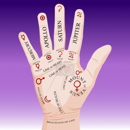 Illustration for An image of a palm reading palmistry. - Royalty Free Image