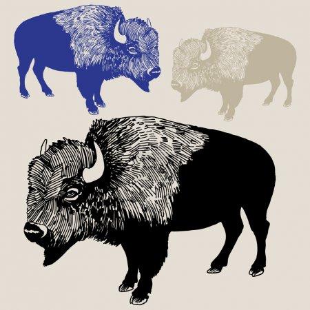 Illustration pour Croquis dessiné à la main de Bison / Buffalo . - image libre de droit